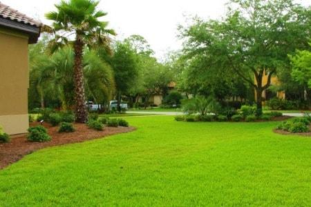 Palm City Lawn Care Fertilization